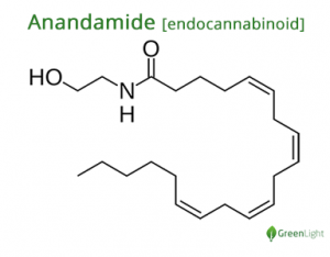 Anandamide Molecular Structure